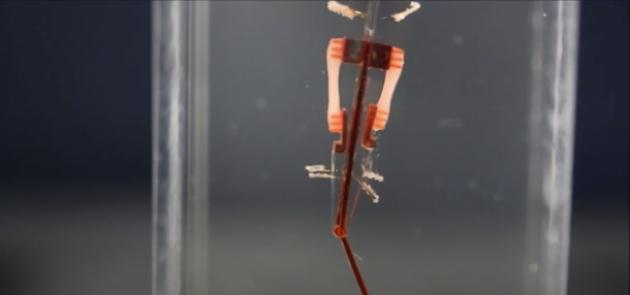 Robot muscoli naturali