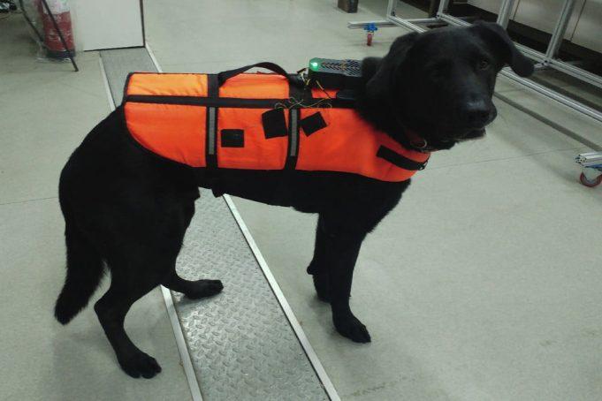 giacca cani sensori aptici