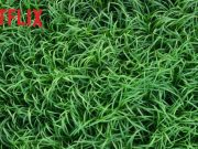 Nell'erba alta Film Netflix