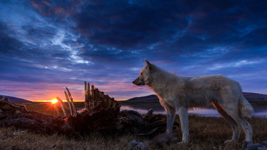 Il regno del lupo bianco - novità Disney+ luglio 2020
