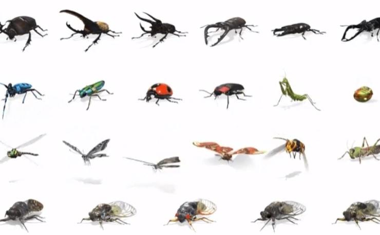Google aggiunge gli insetti AR nella ricerca e aggiorna la scatola di Nest Hub 1